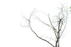 Nieżywi drzewa Zdjęcie Stock