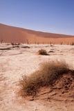 Nieżywi drzewa w Deadvlei, Namib pustynia, Namibia, Afryka Fotografia Stock