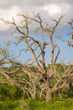 Nieżywi drzewa w pierwszoplanowych chmurach behind Obraz Stock