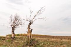 Nieżywi drzewa w polu na chmurnym dniu przy spadkiem Obrazy Royalty Free