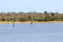Nieżywi drzewa w waterhole gry rezerwa w Afryka Fotografia Stock