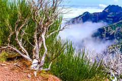 image photo : Dead trees high in mountains