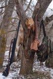 Nieżywi lisy po polowania Zdjęcia Royalty Free