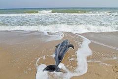 nieżywy delfin Zdjęcie Stock