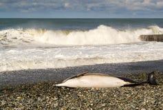 Nieżywy delfin i fala Fotografia Royalty Free