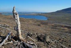 nieżywy drewno Zdjęcie Stock