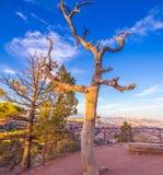Nieżywy Drzewny Bryka jar obraz stock
