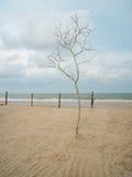 Nieżywy drzewo Zdjęcie Royalty Free