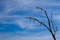 Nieżywy drzewo Obrazy Royalty Free
