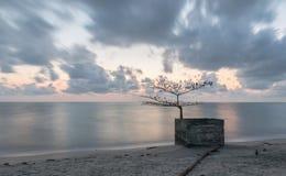 Nieżywy drzewo Zdjęcie Stock