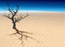 nieżywy drzewo Fotografia Royalty Free