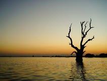 Nieżywy drzewo na jeziorze przy zmierzchem Zdjęcia Stock