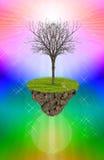 Nieżywy drzewo na kolorowym tle. Zdjęcia Stock