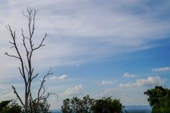 Nieżywy drzewo na nieba tle Obrazy Stock