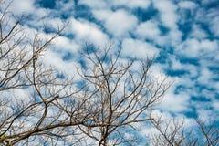 Nieżywy drzewo na nieba tle Zdjęcie Stock