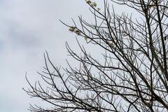 Nieżywy drzewo na nieba tle Zdjęcia Royalty Free