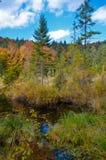 Nieżywy jezioro w lesie, Ð ¡ arpathian góry, Skole, Uktaine Obraz Stock