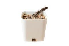 Nieżywy kaktus Zdjęcia Stock
