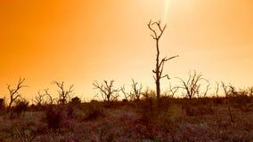 nieżywy krajobrazowy drzewo Obraz Royalty Free