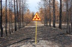 nieżywy las Zdjęcie Stock
