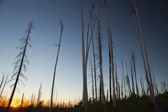 nieżywy las Obrazy Stock