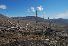 nieżywy las Obrazy Royalty Free