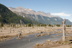 Nieżywy las od erupci Hudson wulkan - Chile Obraz Royalty Free