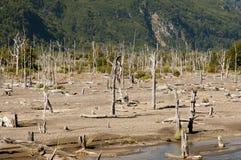 Nieżywy las od erupci Hudson wulkan - Chile Fotografia Stock