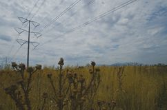 Nieżywy pszeniczny pole pod liniami energetycznymi zdjęcie royalty free