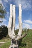 nieżywy stary drzewo Obraz Stock