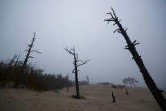 Nieżywy suchy lasowy ekologia problem Obrazy Stock
