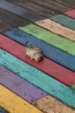 Nieżywy szczur na deskach Zdjęcia Stock