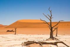 Nieżywy Vlei Namibia Zdjęcie Royalty Free