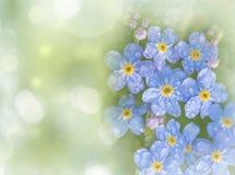 nie zapomnij mi kwiat Zdjęcie Stock