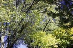 Nieb drzewa Obraz Royalty Free