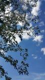 Nieba błękit zdjęcie royalty free