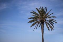 nieba b??kitny palmowy drzewo obrazy royalty free