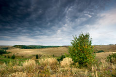 nieba clody osamotniony drzewo Zdjęcie Stock