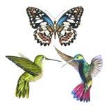 Nieba colibri anf ptasi motyl w przyrodzie akwarela stylem odizolowywającym Zdjęcia Stock