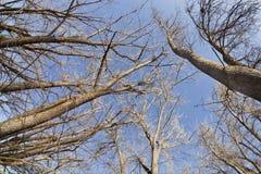 nieba drzew zima Zdjęcia Royalty Free