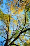 nieba drzewo Zdjęcie Royalty Free