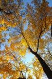 nieba drzewo Fotografia Stock