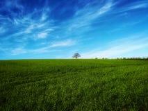 - nieba -nature, tree- trawa - -green zdjęcie stock