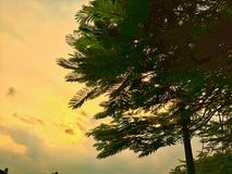 Nieba piękno i drzewo Obraz Stock
