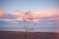Nieba tło na zmierzchu, nadbrzeże składu projekta elementu natury raj Panoramiczny zmierzchu nieba tło Taganrog zatoka, Azov morz Obrazy Stock
