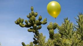 Niebezpieczeństwa pojęcie, kaktus może strzelać balon Obrazy Royalty Free