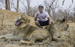 Niebezpieczna poza z lwem i lwicą Zdjęcie Stock