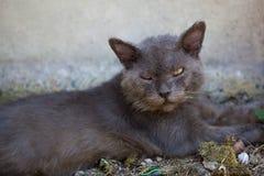 Niebezpieczny bezdomny kot Zdjęcie Stock
