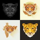 Niebezpieczny ssaka zwierzę Wektorów ustaleni tygrysy w poligonalnym stylu Drapieżczy zwierzę Obrazy Royalty Free