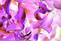 Niebiańska roślina Fotografia Stock